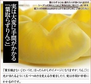 300葉取らずリンゴ.jpg